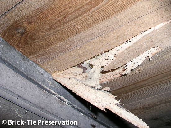 active woodworm infestation in Sheffield South Yorkshire seen by Brick-Tie Preservation
