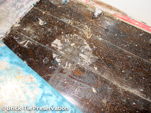 dry rot treatment in sheffield with mycelium