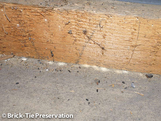 active common furniture beetle infestation in a roof in Ripon