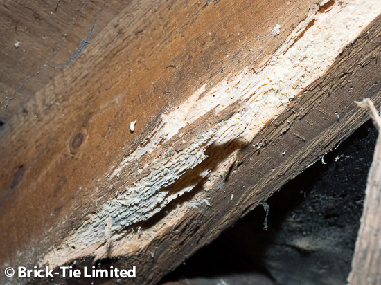 Woodworm in Yorkshire vicarage